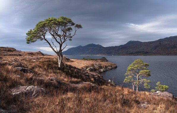 Picture tree, Scottish Highlands, Scots pine, Wester ross
