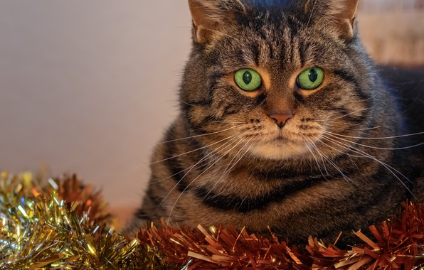 Picture cat, holiday, new year, portrait, tinsel