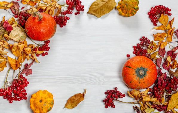 Picture leaves, photo, pumpkin, Rowan