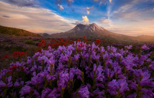 Picture field, the sky, flowers, hills, Doug Shearer