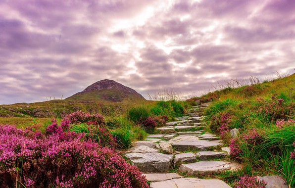Picture road, flowers, Ireland, mountains.