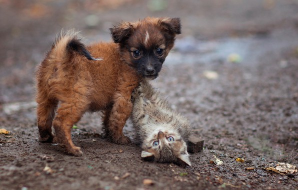Picture puppy, kitty, kids