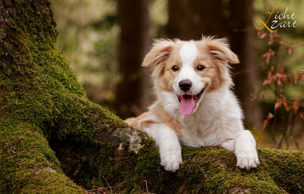 Picture forest, trees, nature, animal, moss, dog, puppy