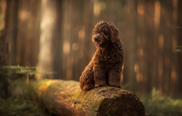 Picture forest, nature, animal, dog, log, dog