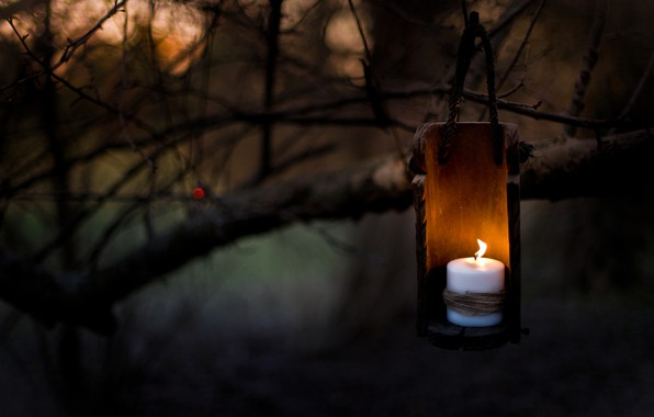 Picture night, branches, tree, candle