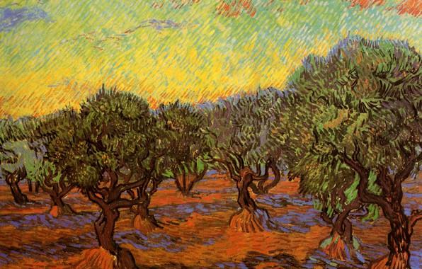 Picture trees, Vincent van Gogh, Orange Sky, Olive Grove