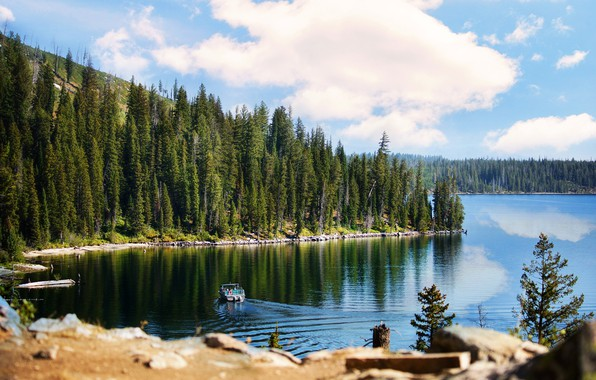 Picture forest, summer, the sky, water, nature, lake