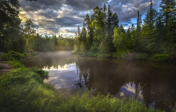 Picture forest, summer, the sky, trees, landscape, clouds, nature, fog, ate, grass, birch, Bank, river