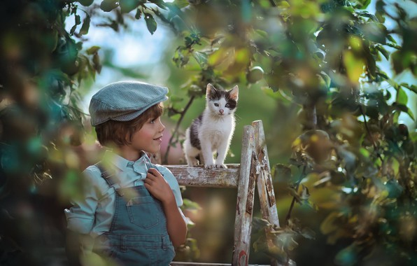 Picture branches, tree, mood, boy, baby, cap, kitty, Apple, ladder