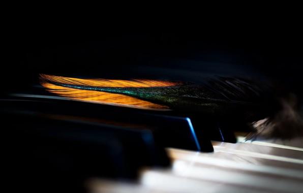 Picture macro, pen, piano keys