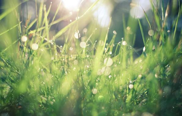 Picture grass, drop, macro, macro droplets, grass macro wallpapers, grass field, droplet, droplets of water
