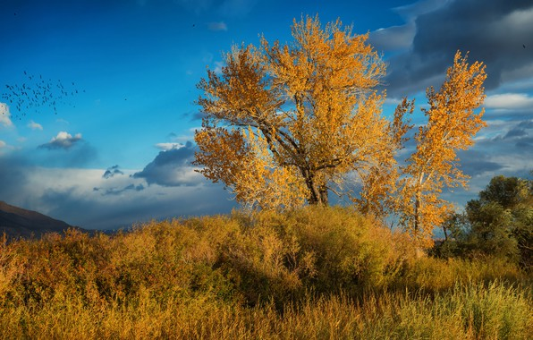 Picture grass, leaves, clouds, trees, landscape, birds, clouds, nature, blue, tree, mood, branch, vegetation, foliage, beauty, …