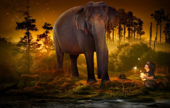 Picture trees, butterfly, elephant, child, Bank, twilight