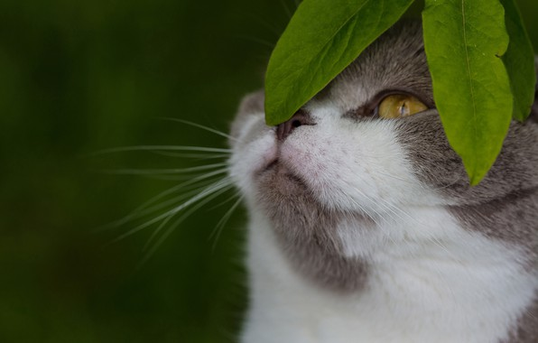 Picture cat, leaves, background, muzzle, cat