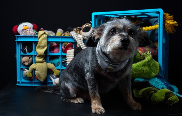 Picture clothing, dog, baskets