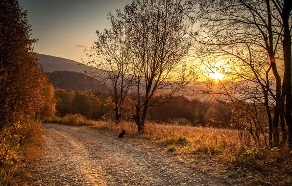 Picture road, autumn, cat, sunset, nature