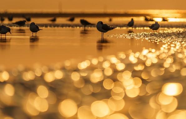 Picture water, light, sunset, birds, glare, shore, seagulls, pond, bokeh