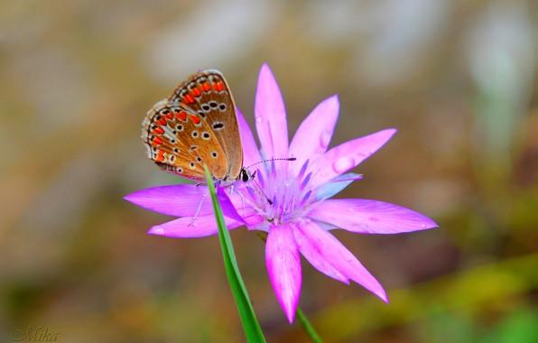 Picture Macro, Butterfly, Flower, Flower, Macro, Butterfly
