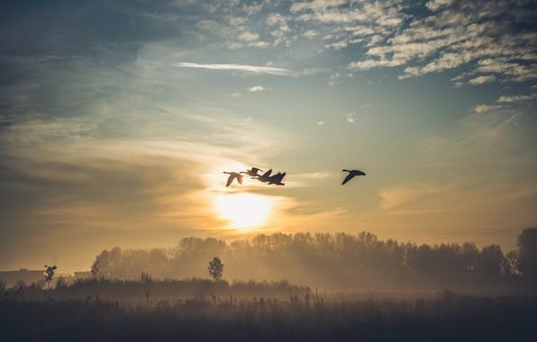 Picture birds, fog, lake, morning