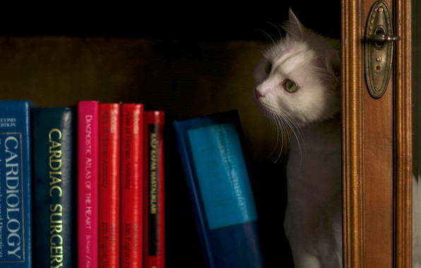 Picture cat, white, cat, look, the dark background, books, shelf, white, wardrobe, library, still life, Kote, …