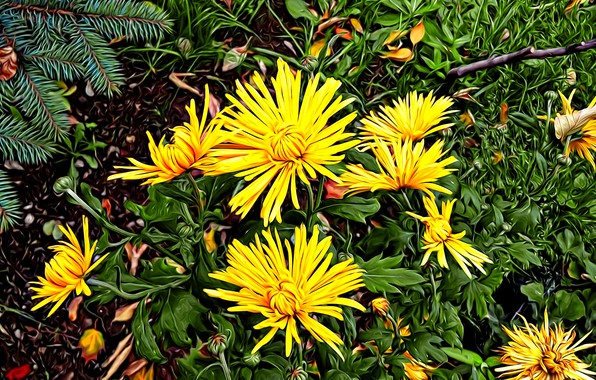 Picture greens, leaves, rendering, petals, spruce branch, autumn flowers, yellow chrysanthemum, autumn palette