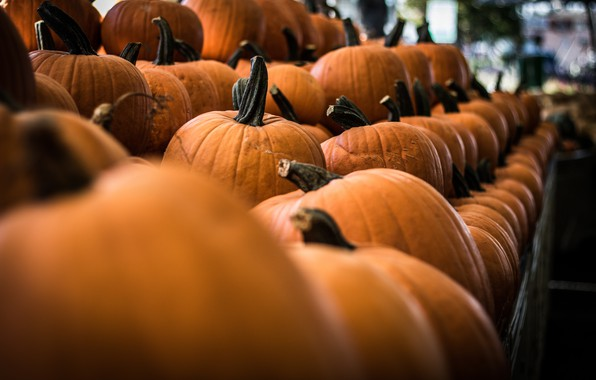 Picture Vegetables, Halloween, Fair, Ripe