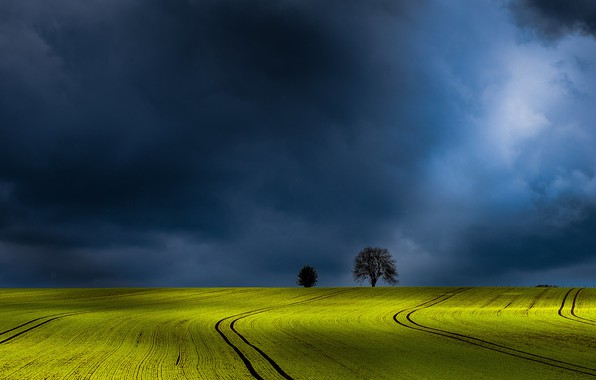 Picture field, the sky, trees, clouds, photo