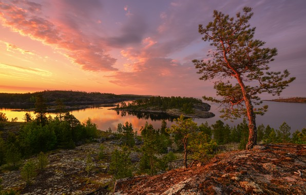 Picture trees, landscape, nature, forest, Lake Ladoga, Ladoga, white night, Maxim Evdokimov