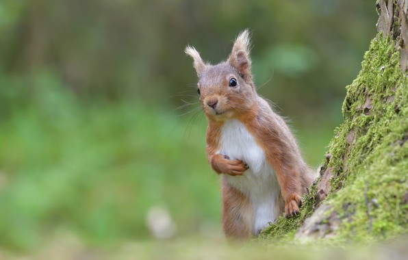Picture nature, animal, moss, protein, animal, rodent
