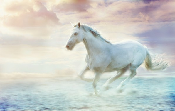 Picture sea, wave, white, the sky, clouds, pose, fog, movement, horse, shore, horse, stallion, beauty, treatment, …