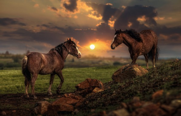 Picture field, summer, the sky, the sun, clouds, light, landscape, sunset, clouds, nature, stones, two, horses, …