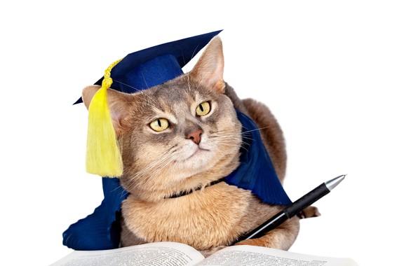 Picture cat, humor, hat, muzzle, handle, white background, book, brush, uniform, scientist