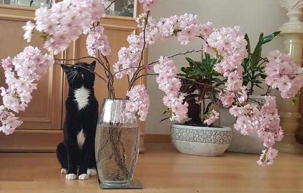 Picture cats, flowers, pink, Sakura