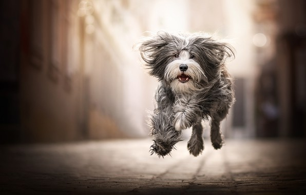 Picture joy, mood, jump, dog, walk, bokeh, shaggy