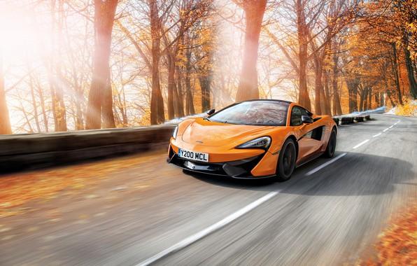 Picture road, autumn, trees, orange, McLaren, speed, rushes
