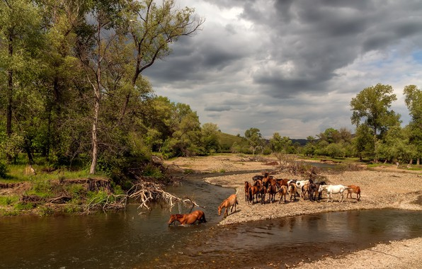 Picture forest, summer, the sky, water, clouds, trees, landscape, clouds, nature, river, branch, shore, heat, horses, …