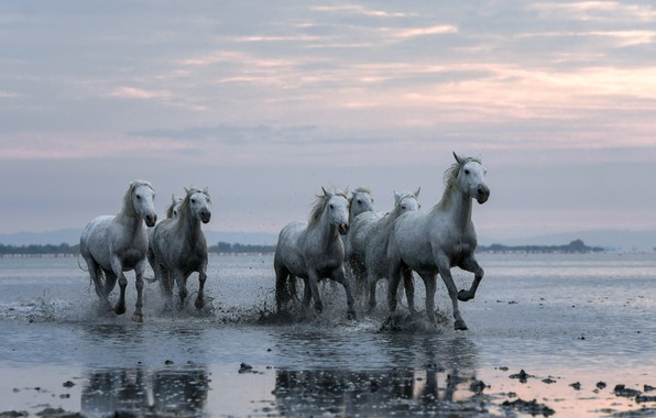 Picture nature, river, horses