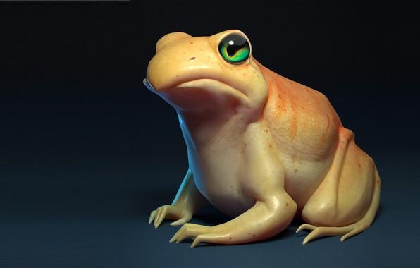 Picture frog, Frog, art, Julien PARISPRO