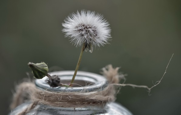 Picture background, dandelion, Bank