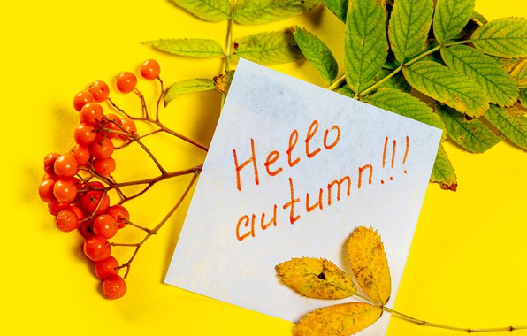 Picture autumn, the inscription, leaf, branch, Rowan, postcard