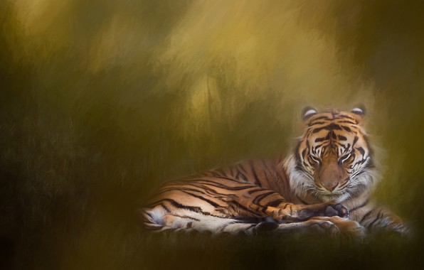 Picture tiger, background, treatment, texture, wild cat