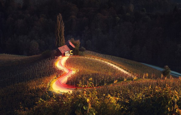 Picture road, field, trees, lights, house, excerpt, grapes, bending, house, heart