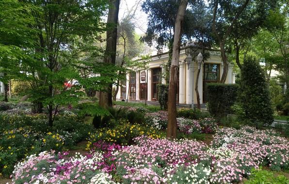 Picture Spring, Spring, Azerbaijan, Azerbaijan, Baku, Baku, The Governor's garden