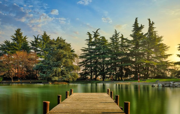 Picture forest, lake, the bridge