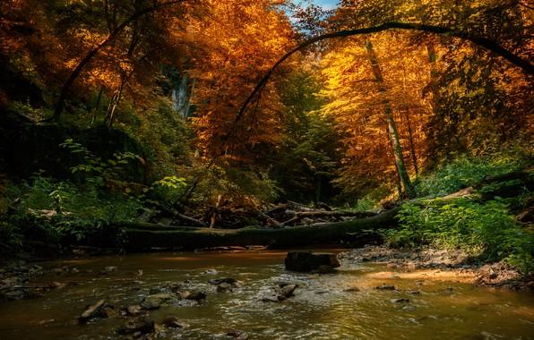 Picture autumn, forest, trees, landscape, nature, river, deadwood, Tamas Hauk