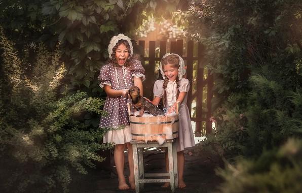 Picture summer, foam, nature, children, animal, girls, the fence, dog, bathing, stool, dog, tub, Pipkin Oksana