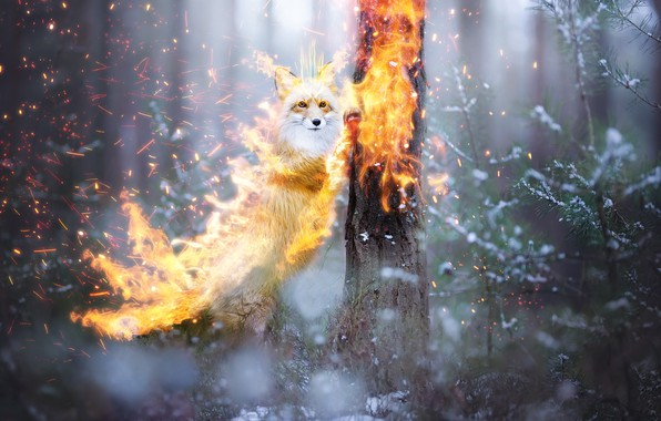 Picture forest, snow, fire, fantasy, Fox, by 0l-Fox-l0