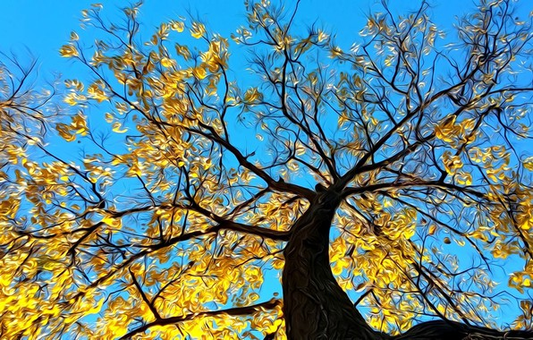 Picture autumn, the sky, rendering, tree, branch, foliage