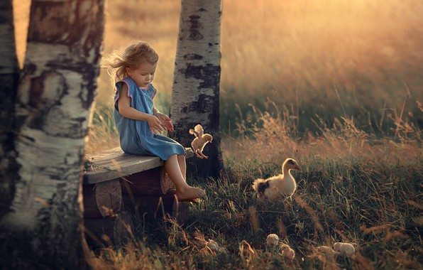 Picture summer, trees, birds, nature, chickens, the evening, girl, shop, birch, baby, child, Chicks, goose, Marianne …