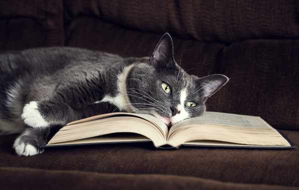 Picture cat, cat, look, face, comfort, background, sofa, dark, paws, lies, book, brown, page, green-eyed, smoky, …